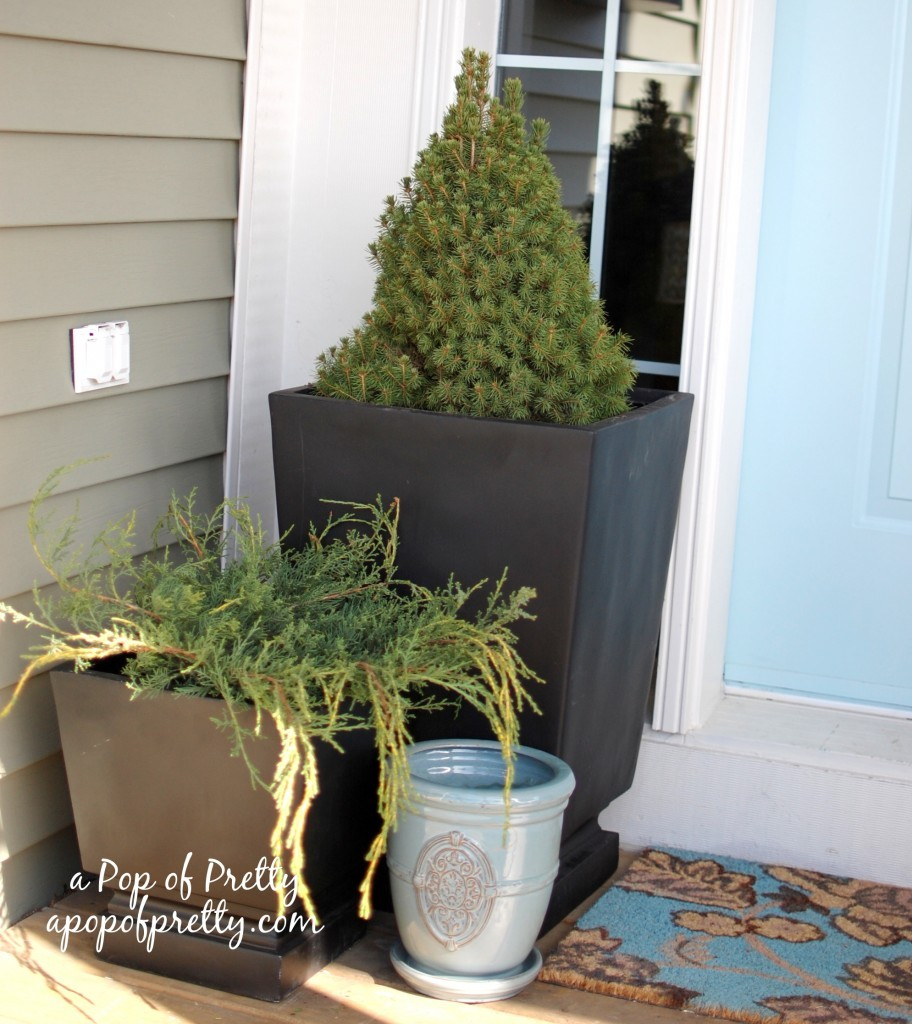 container gardening in pots
