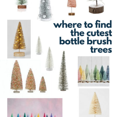 Bottle Brush Trees – Where to Find